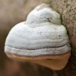 Spür die Kraft der Natur mit ViNatura